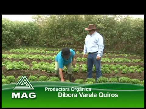 Agricultura Orgánica En La Región Norte De Costa Rica Youtube