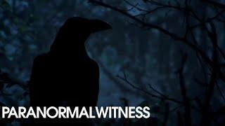 Video PARANORMAL WITNESS (Clips) | The Devil Himself | SYFY download MP3, 3GP, MP4, WEBM, AVI, FLV Agustus 2018