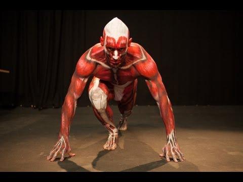 Anatomical Man | RMIT University - YouTube