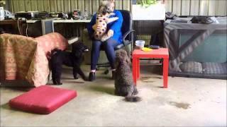 Teaching An Assistance Dog To Cuddle.wmv
