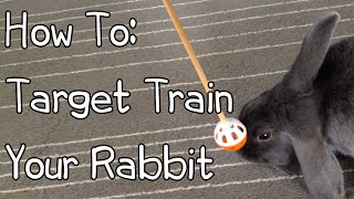 How To Target Train Your Rabbit