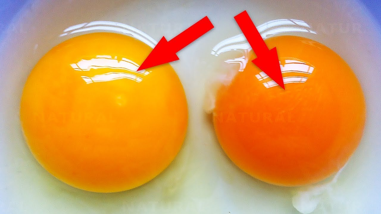 This Is What The Color of Your Egg Yolk Means