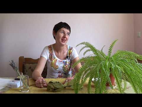 Ивана Купала \ Обряд на защиту \ Гадание онлайн на день