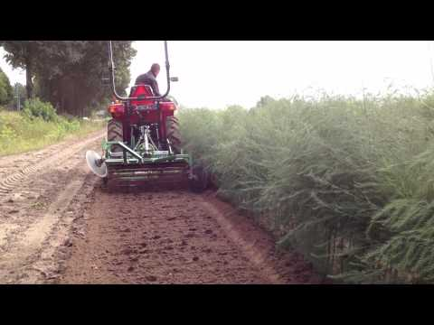 Mechanical weed control in young asparagus