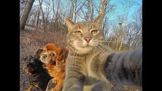 ПРИКОЛЫ С КОТАМИ И СОБАКАМИ 2021 Приколы со смешными животными Смешные котики Подборка 1