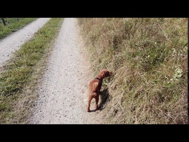 (Film 26)  Spaziergang rund um Rehsiepen, Sorpetal