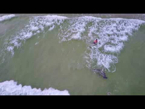 Massive Hammerhead Shark Caught From Beach -July 4th Weekend - Panama City Beach - Catch & Release