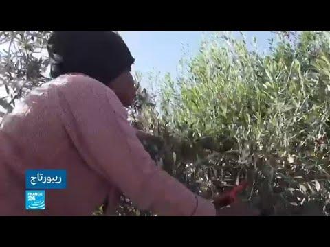 مزارع الزيتون في مدنين التونسية..فرصة عمل للمهاجرين الأفارقة وسط ظروف قاسية!  - 11:55-2019 / 2 / 8