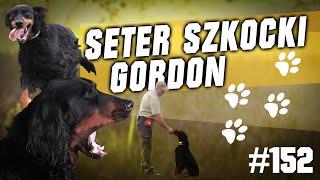 Darz Bór odc. 152 - Poznajemy rasy psów myśliwskich - Seter Szkocki Gordon