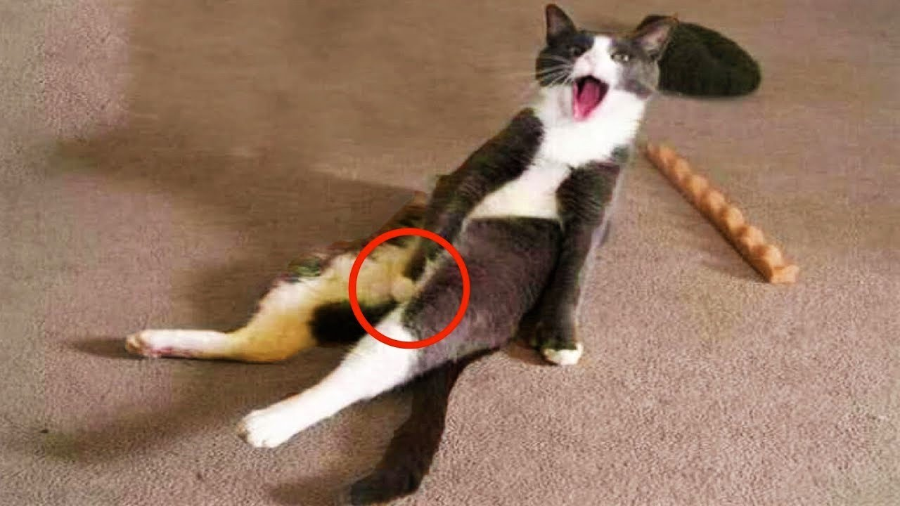 Funniest Cats ? Cats will make you laugh - Funny Cat Videos Compilation #48