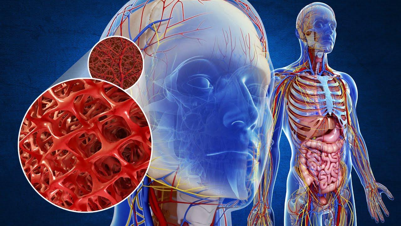 Circulatory System - YouTube