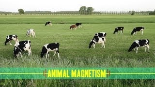 Animal Magnetism: How Animals Navigate thumbnail