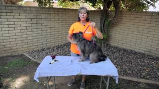 How To Get A Dog Not To Move While Grooming : Dog Training Musts