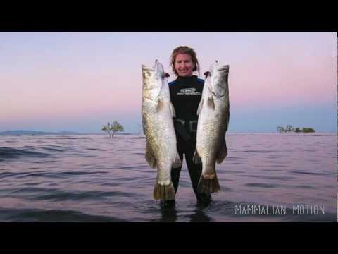 Barradise - Spearfishing For Barramundi