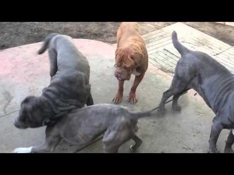 Bruce Dog-Social Week 2