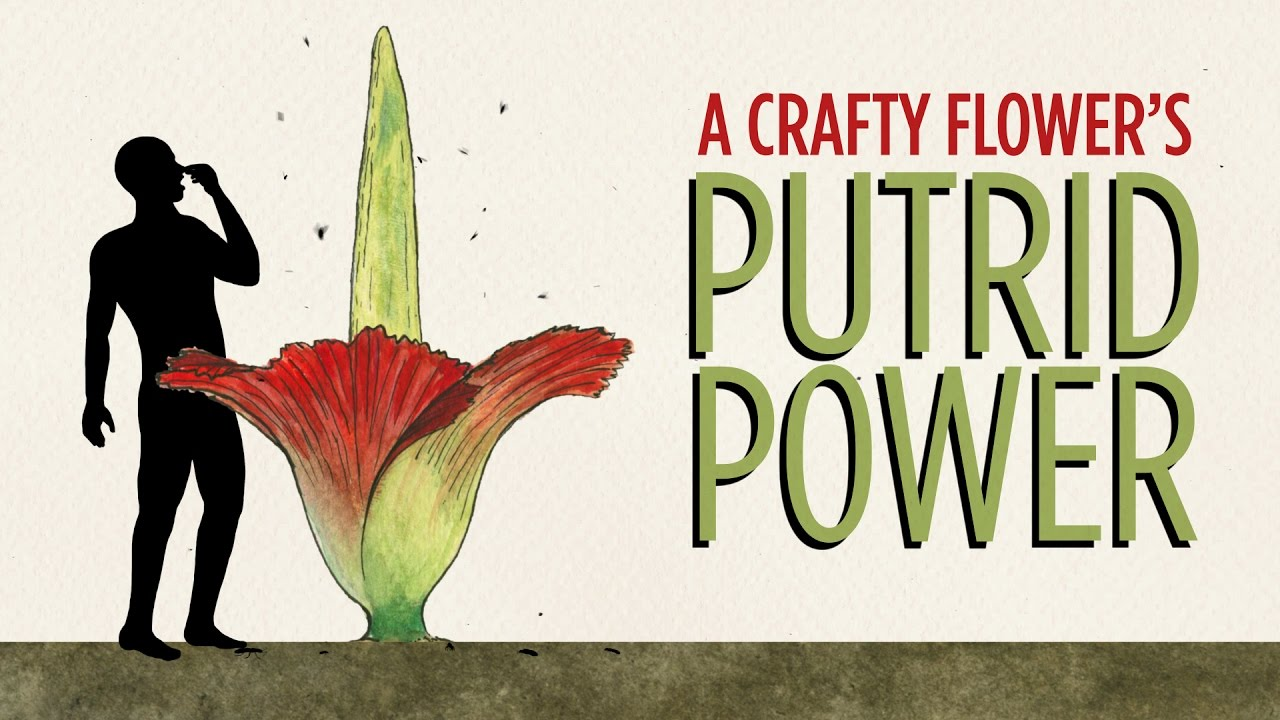 a-crafty-flower-s-putrid-power