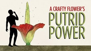 A Crafty Flower's Putrid Power