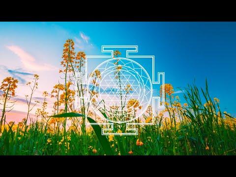 🌠 КРАСИВАЯ ПРИРОДА и ПОЛЕВЫЕ ЦВЕТЫ на лугу ~ Красивое видео и Звуки природы для релаксации 🌠