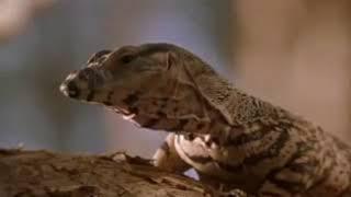 Данди Крокодил 🐊 1986 фильм смотреть в хорошем качестве бесплатно онлайн на русском полная версия