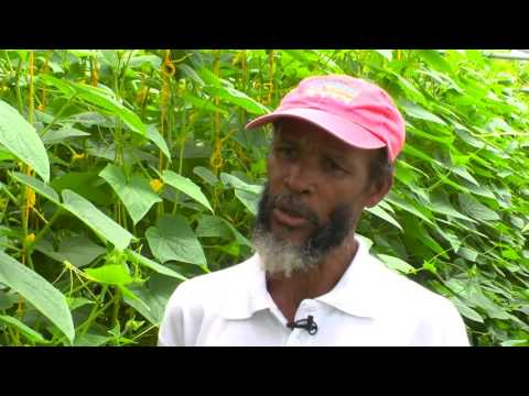 Belle Vue Farmers' Cooperative, St. Lucia