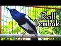 Kacer Juara Tebar Pesona  Mp3 - Mp4 Download