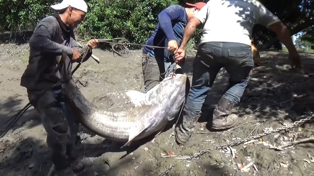 10 Peces monstruo capturados en Rios de Colombia.