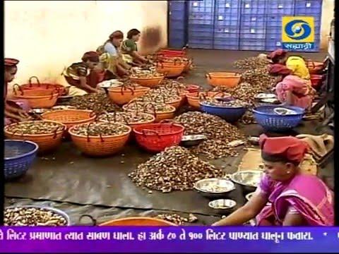 'Cashew Processing Industry' _ 'काजू प्रक्रिया उद्योग'