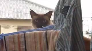 Жестокий японский кот(, 2015-11-14T23:33:41.000Z)