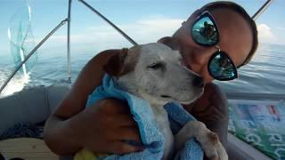 Sand Bar July 14 2016 Dogs Balls and Sunshine