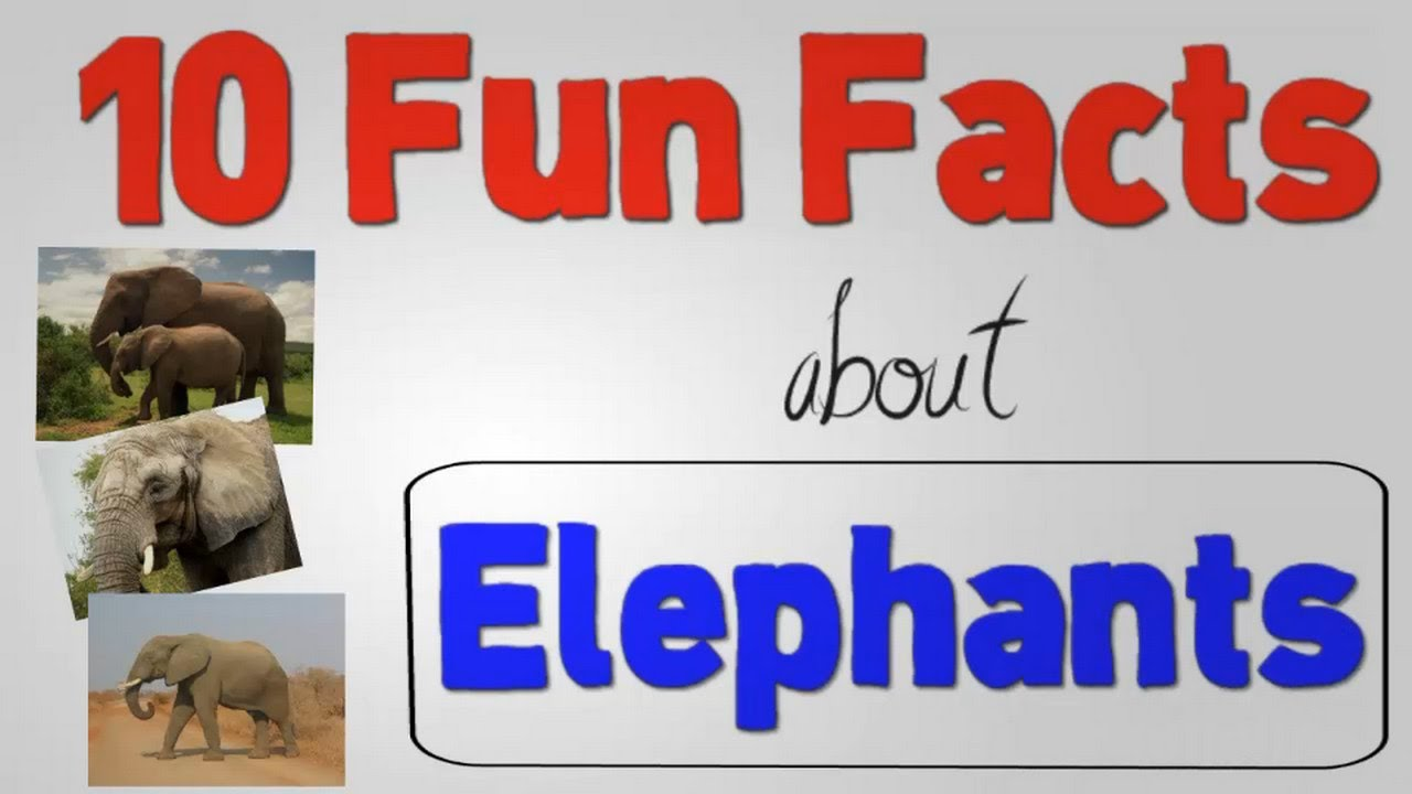 10 Fun Facts About Elephants - YouTube