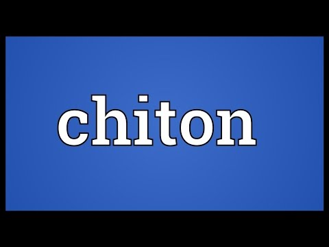 Chiton Meaning