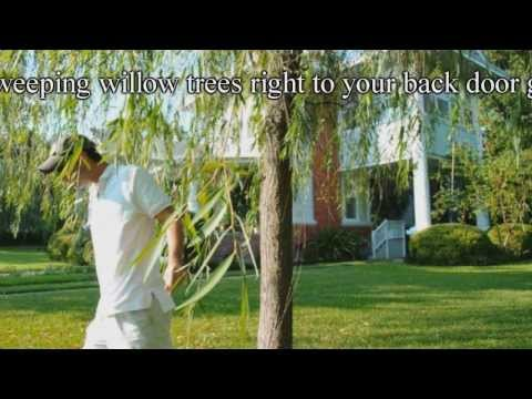 *Plant a Weeping Willow Tree* +Correctly+FAST Grow Shade Trees+