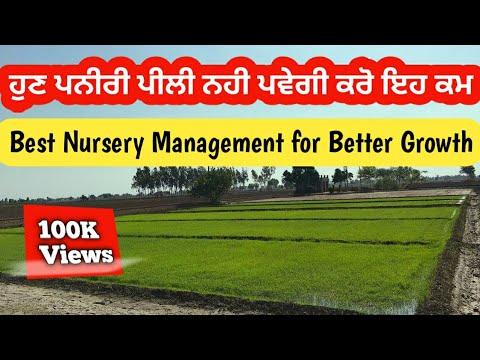 ਘੱਟ ਸਮੇਂ ਚ ਪਨੀਰੀ ਤਿਆਰ ਕਰਨ ਦਾ ਫਾਰਮੂਲਾ | paddy nursery formula for better growth in india