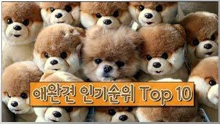 애완견 인기순위 Top10 ! 1위는 과연?
