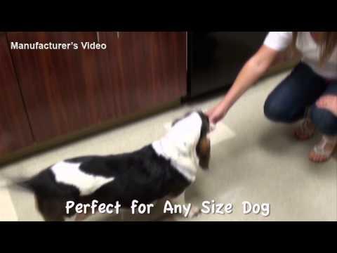 dingo-bones-rawhide-dog-treats-(drsfostersmith)