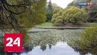 Смотреть видео Знаменитый Нарышкинский пруд зарастает тиной - Россия 24 онлайн