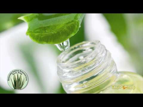 Aloe Vera | Καλλιέργειες Πάτρα,παρθένο ελαιόλαδο,Σταφύλια,ζελέ Aloe Vera,Βιολογικά Προϊόντα Πάτρα