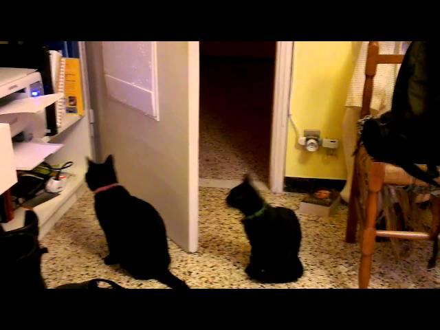 cats vs samsung scx-3400 laser printer
