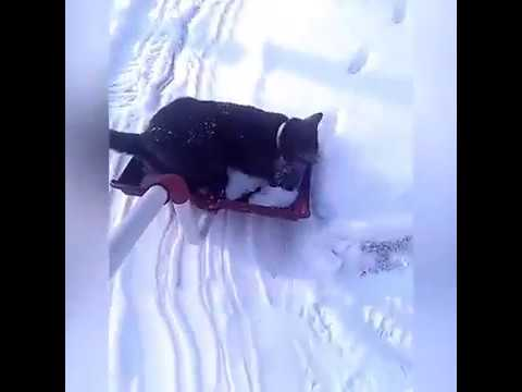 Cats Love Winter-Funny Cats On Winter Compilation