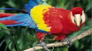 Why Do Parrots Parrot? Do They Know What They're Saying?