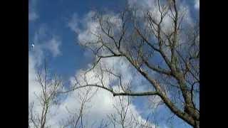 ... en regardant le ciel ... à mon amie Gabriella