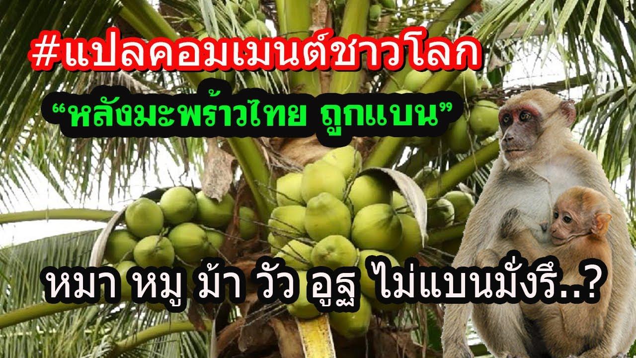 แปลคอมเมนต์ชาวโลก หลังมะพร้าวไทยโดนแบน