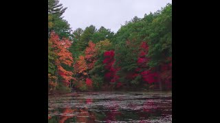Video: Fall colors begin popping in Derry