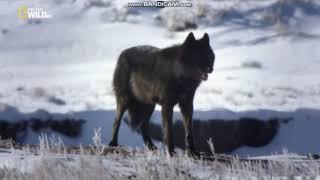 А. Брянцев - Волчья Стая клип