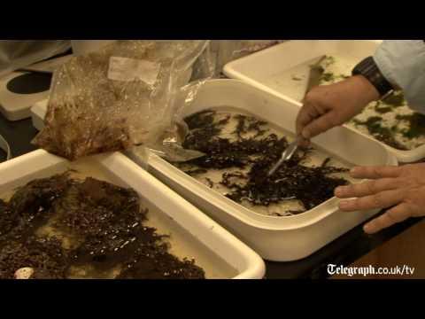 Oil spill killing off algae, leading to dead zones.