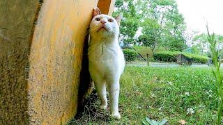 公園の小さな家に住んでいる野良猫たち