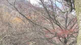 ヤビツ峠から大山山頂~大山三峰を経て煤ヶ谷に下山。静かなそしてタフ...