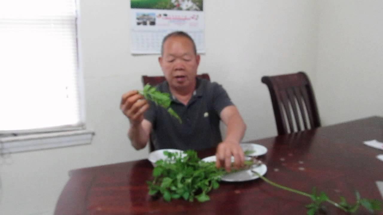How to prepare Presley vegetable – Nhặt rau Cần như thế nào