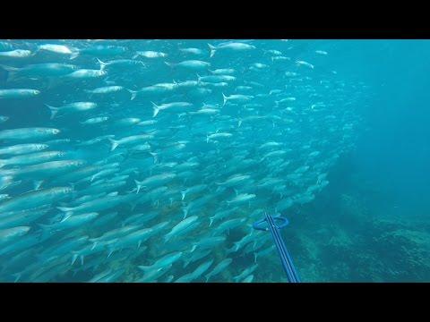 Spearfishing gold coast secret spots (Gopro)
