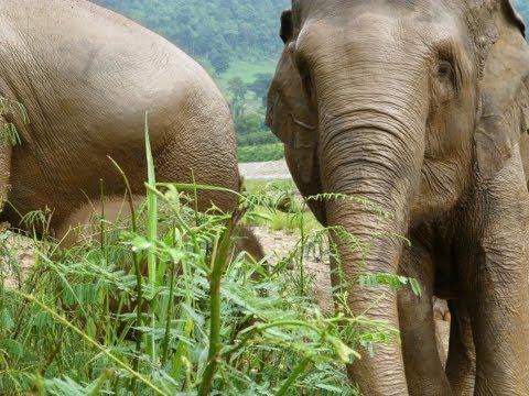 Elephant Nature Park Volunteering